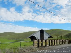 highland rd cattle barnhorse