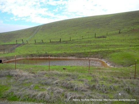 laughlin rd stock pond