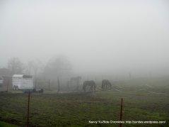 N Flynn Rd ranch