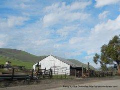 collier canyon barns