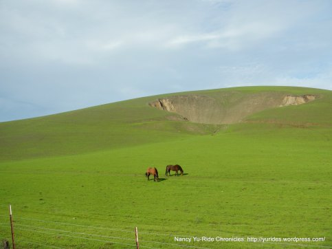 collier canyon horses
