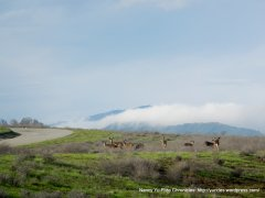 collier canyon deer