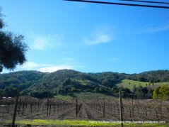 franklin canyon vineyard