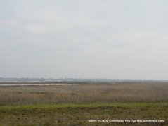 marshes-wetlands