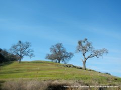 pleasanton ridge park