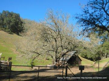 back ranch