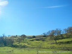 san felipe rd landscape