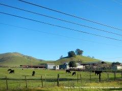 day rd ranch