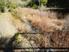 coyote creek