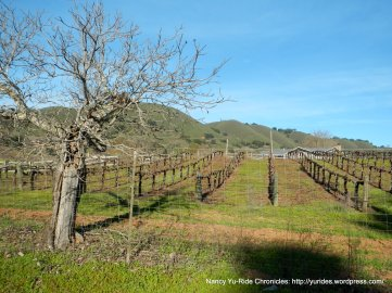 watsonville rd vineyard