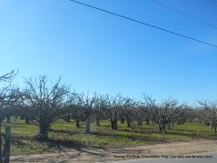 valley orchards