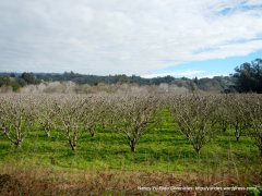 eureka canyon orchard