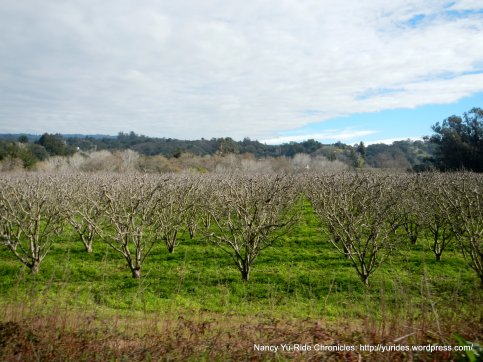 eureka canyon orchard