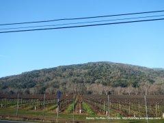watsonville rd vineyard