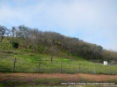 oak woodlands
