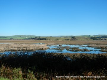tomales bay wetlands