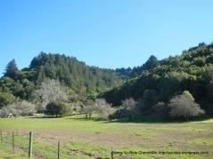 dense hills