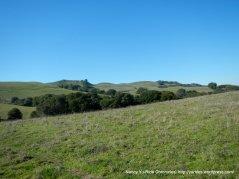 briones park landscape