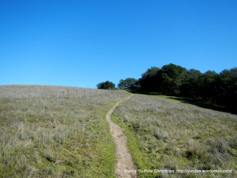 unmarked trail-briones peak