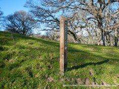 to blue oak trail