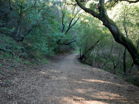 blue oak trail