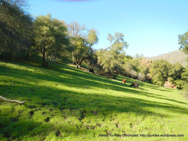 briones landscape