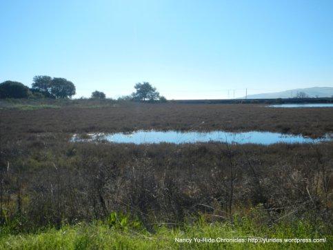 cordelia marshes