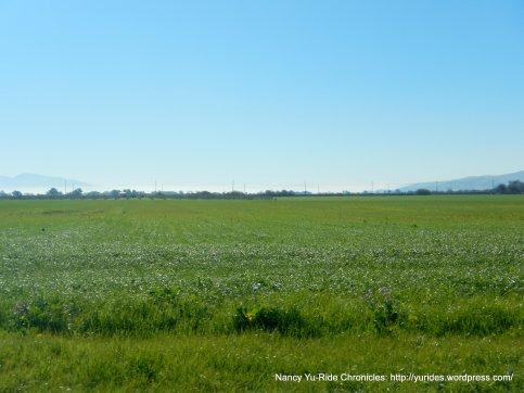cordelia farmland