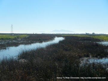 cordelia wetlands