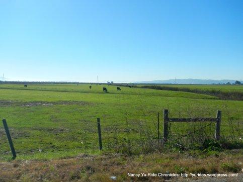 cordelia open fields