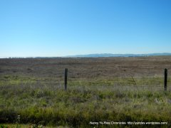 grizzly island rd marshes