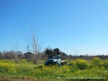 cordelia farm