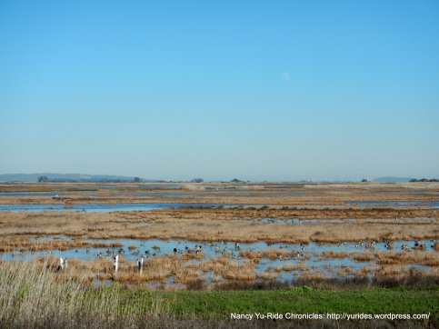 goodyear marshes