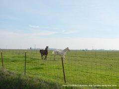 roaming horse