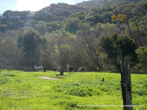 san juan canyon alpaca ranch