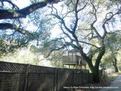 san juan canyo tree house