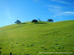 union rd green hills