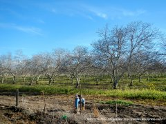 hollister valley orchards