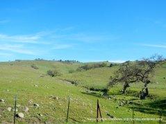 lone tree rd hills