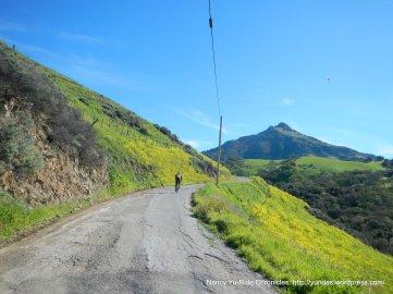 lone tree rd-santa ana mountain