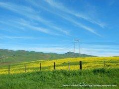 vibrant yellowssanta ana valley