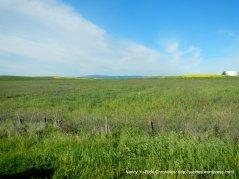 john smith rd meadows