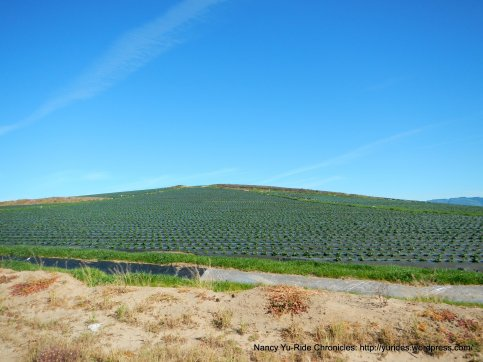 coastal berry farms