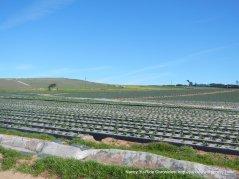 coastal berry farms