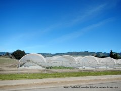 college rd farms