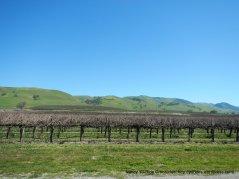 cienaga rd vines