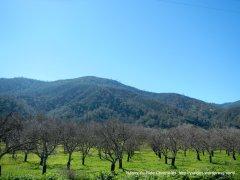 cienaga valley orchards