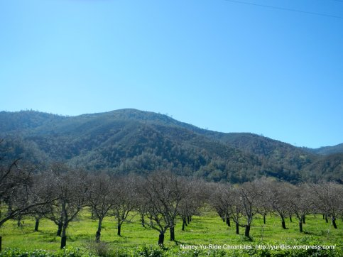 cienaga valley orchards