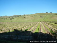 cienaga valley vineyards