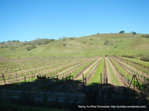 cienaga valley vineyards